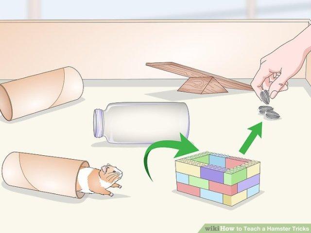 Teach a Hamster Tricks Step 15 Version 2.jpg