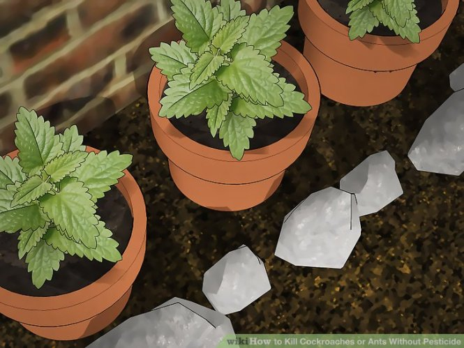 Image Titled Remove Ants From Potted Plants Step 4