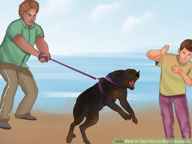 Take Pets on Beach Vacations Step 16.jpg