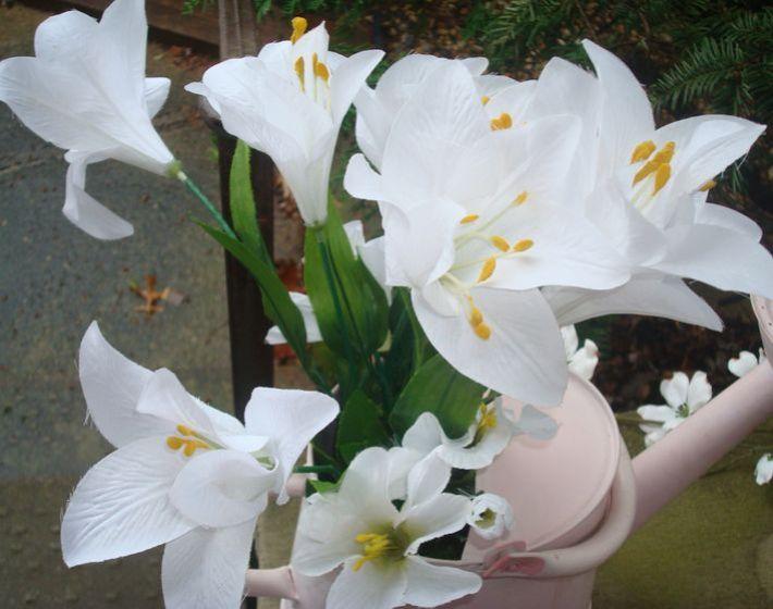 Lilyfrommanyangles.jpg