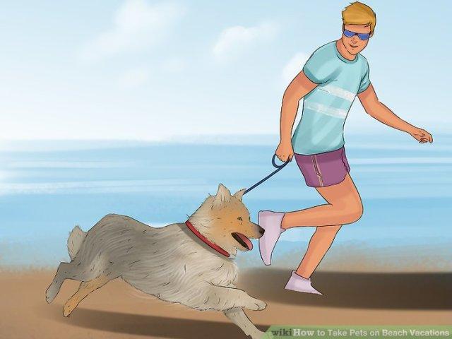 Take Pets on Beach Vacations Step 11.jpg