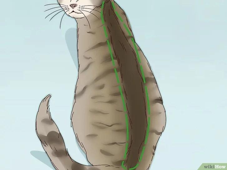 Tiêu đề ảnh Identify a Tabby Cat Step 7