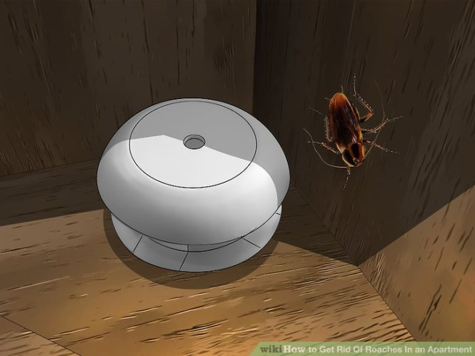 Image Led Get Rid Of Roaches In An Apartment Step 1