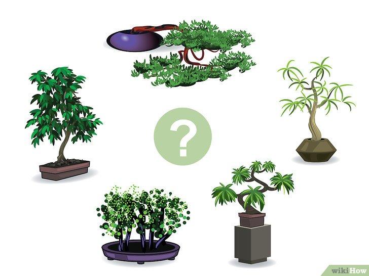 Come Creare Un Bonsai 16 Passaggi Illustrato
