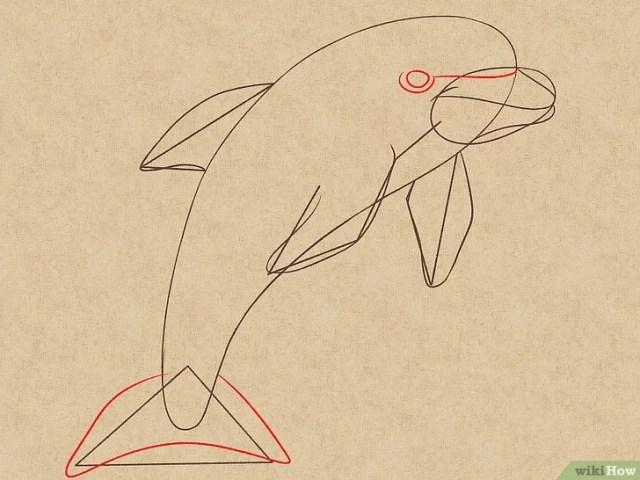 Cara Menggambar Lumba-Lumba Hidung Botol