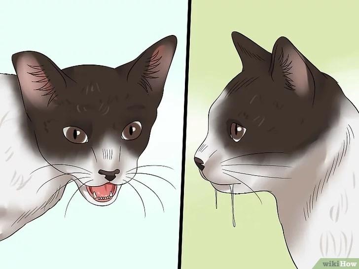 Mencegah Penularan Rabies pada Manusia dan Kucing
