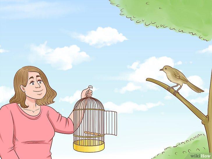 الإمساك بطائر Wikihow