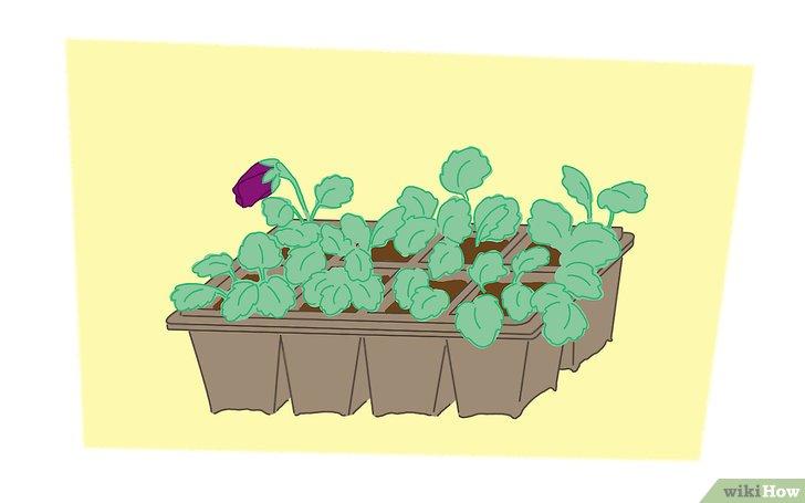 Come Coltivare Le Violette Del Pensiero 6 Passaggi
