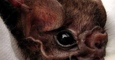 Tim Peneliti Susuri Hutan Aceh Besar Cari Kelelawar Vampir