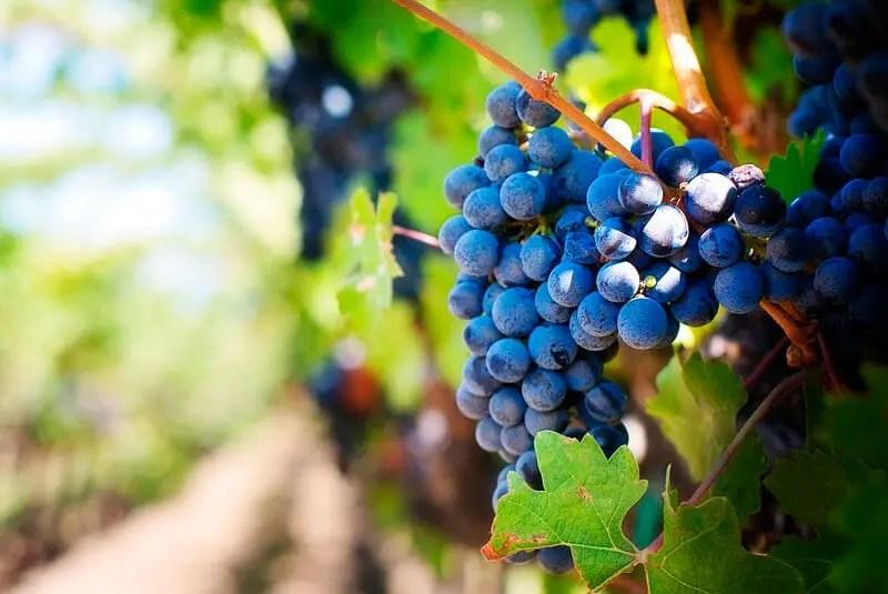 viñedo rioja