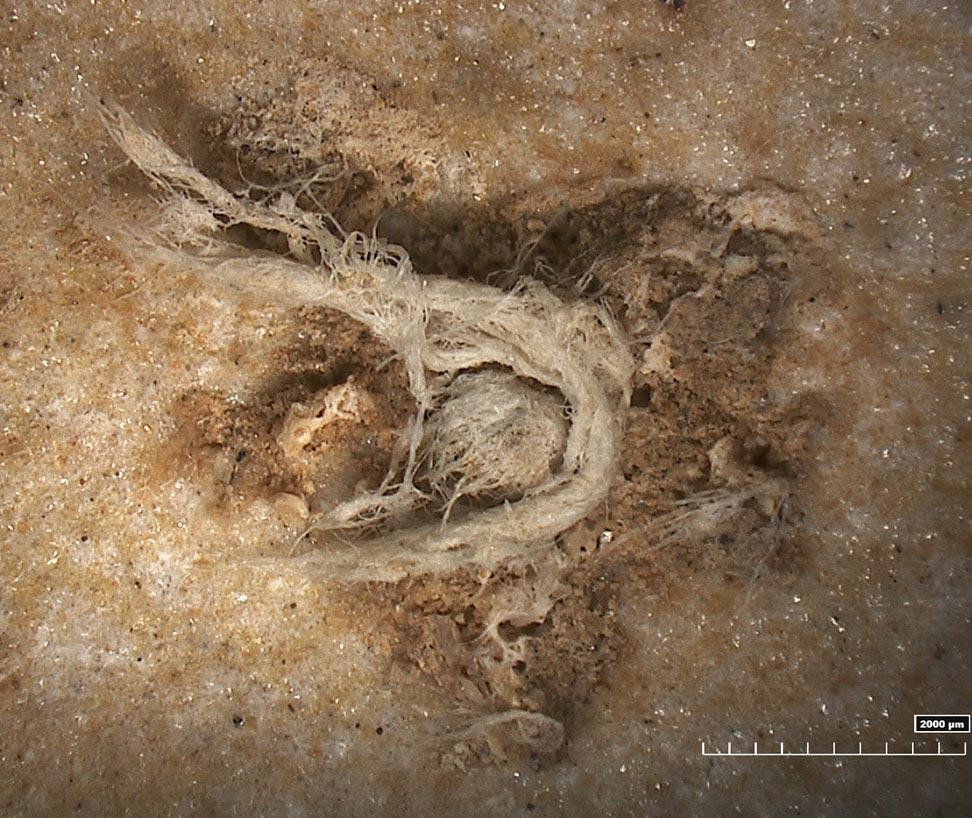 Neanderthals were as technologically advanced as homo sapiens