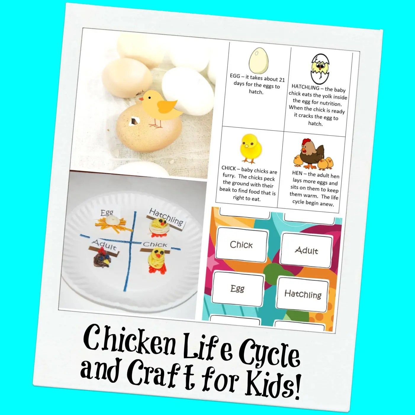 Chicken Life Cycle And A Paper Plate Craft For Kids