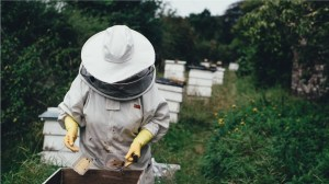 Quality Scottish products including honey and beekeeping equipment