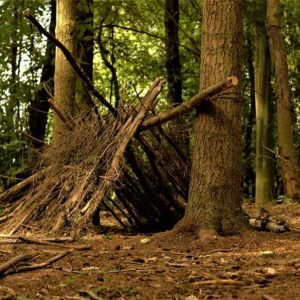 2 Day Woodland Survival & Bushcraft Course - image  on https://www.wild-survivor.co.uk