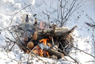 Fire   Wild Survivor