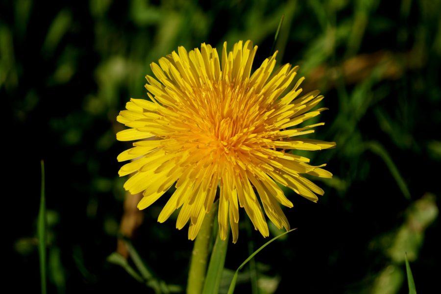 Spring Foraging | Wild Survivor
