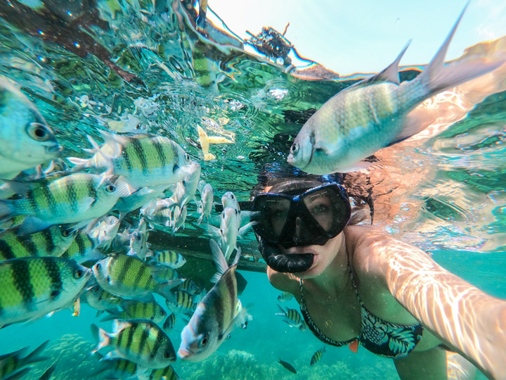 Schnorcheln mit Fischen