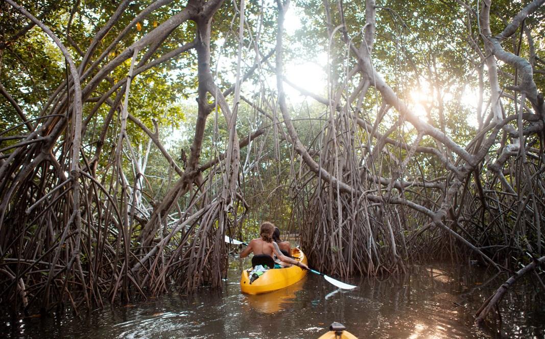 Mit dem Kajak in den Mangroven Guatemalas