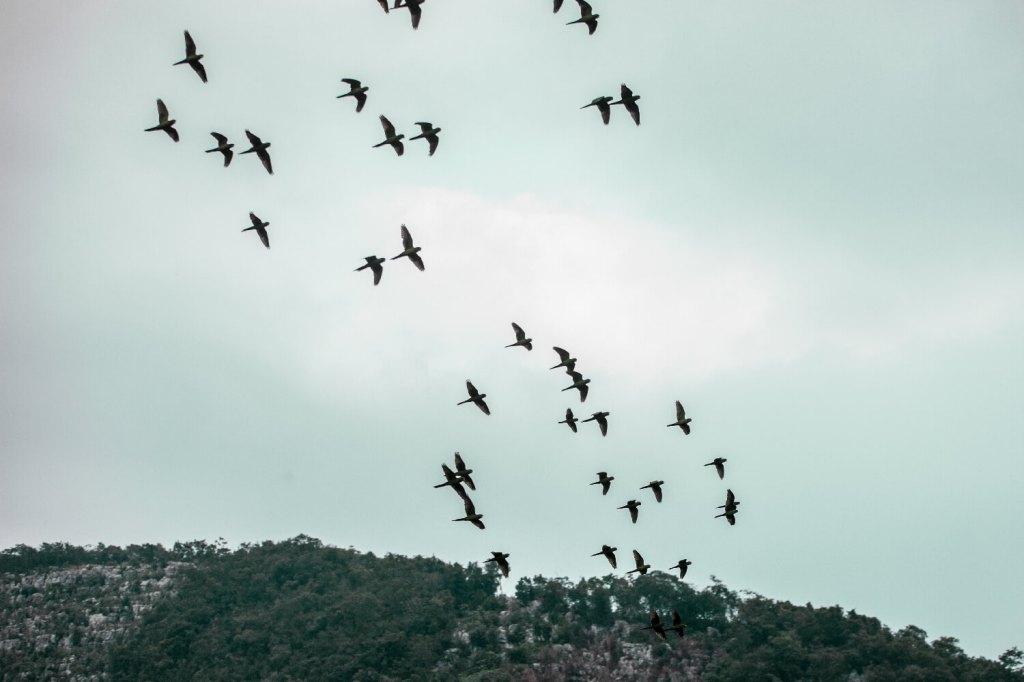 Huahua Papageienhöhle in Mexiko