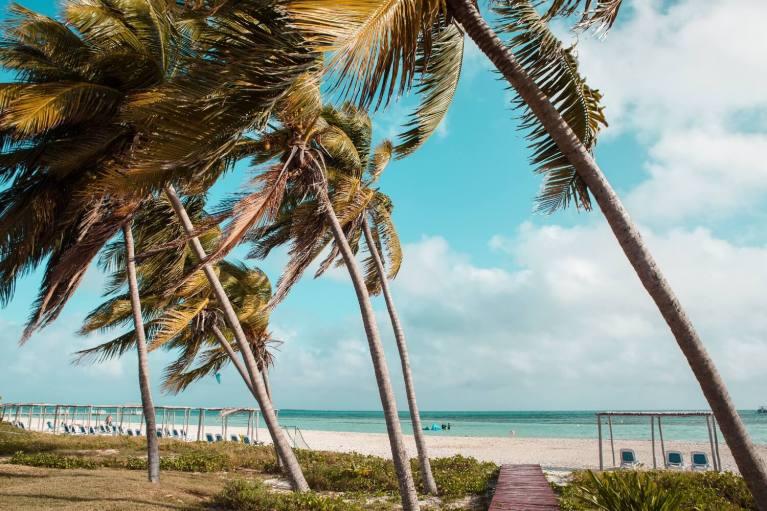 Kuba Palmenstrand Auswandern