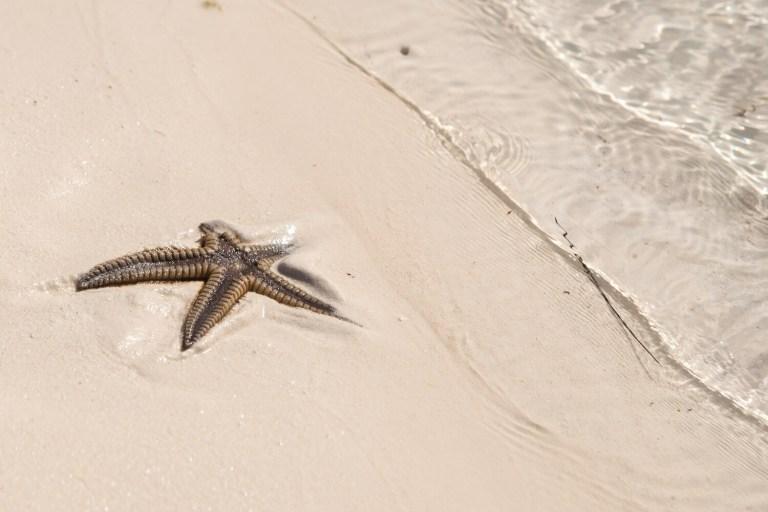 Kuba Seestern Auswandern