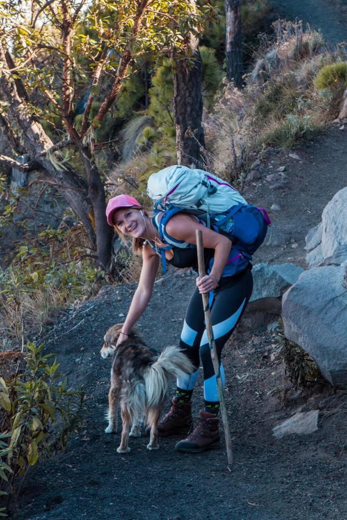 Wanderhund auf dem Vulkan Acatenango