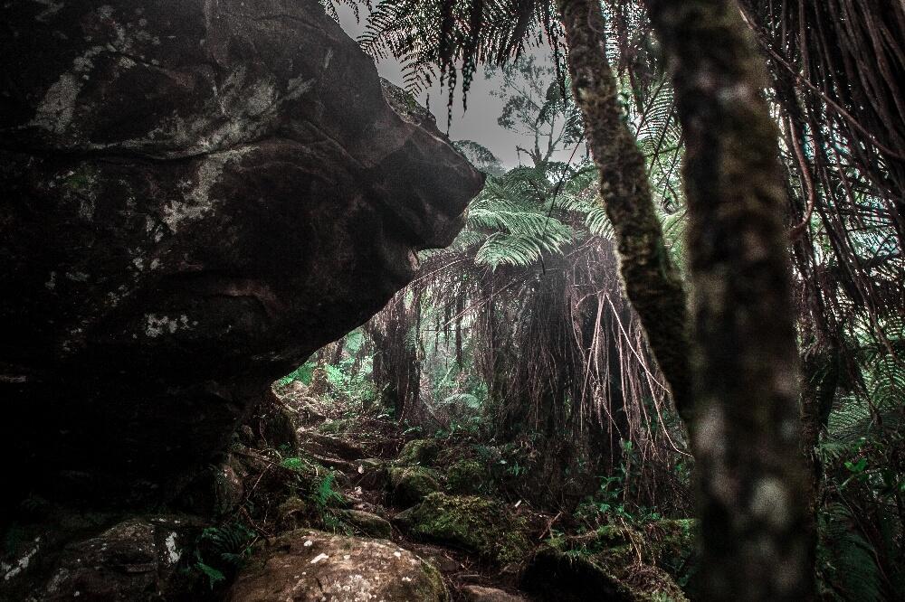 Waldweg Pico Turquino Wanderung