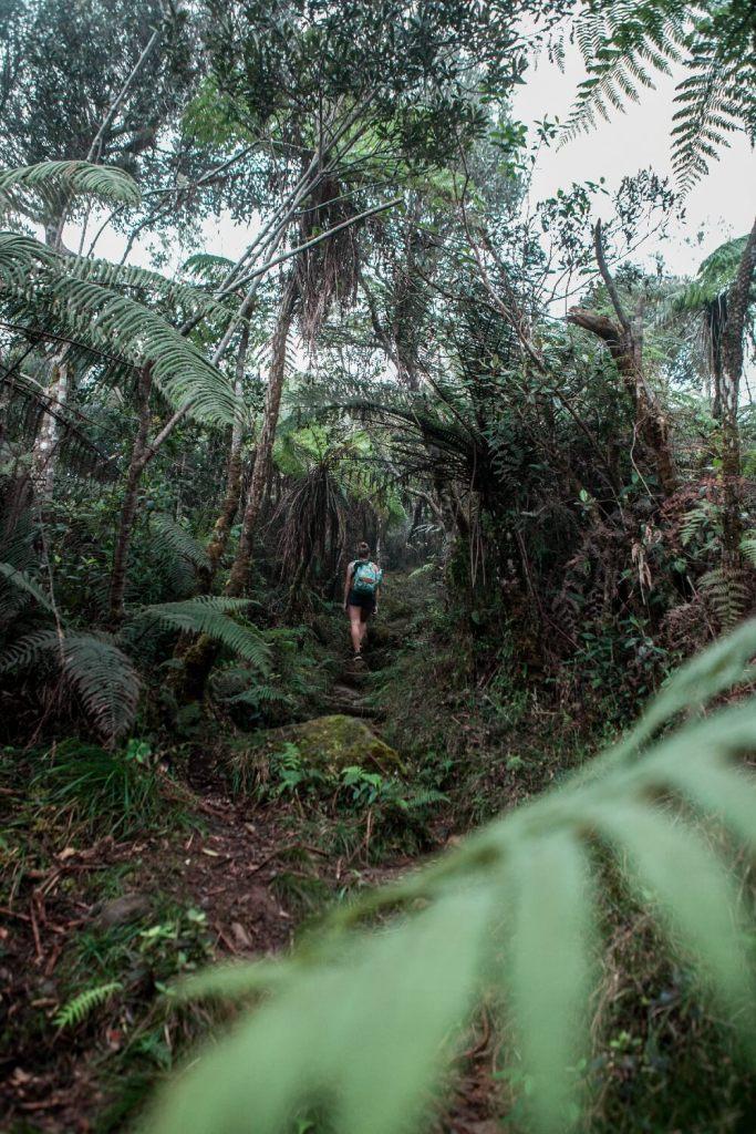 Wanderroute durch den Wald auf Kuba