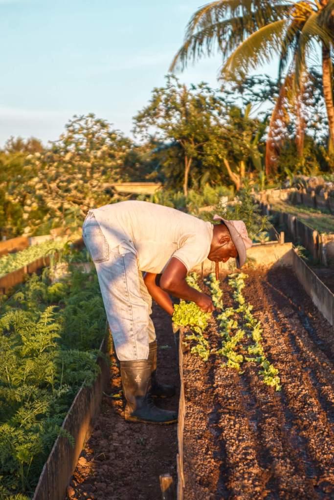 Gärtner in Vinales