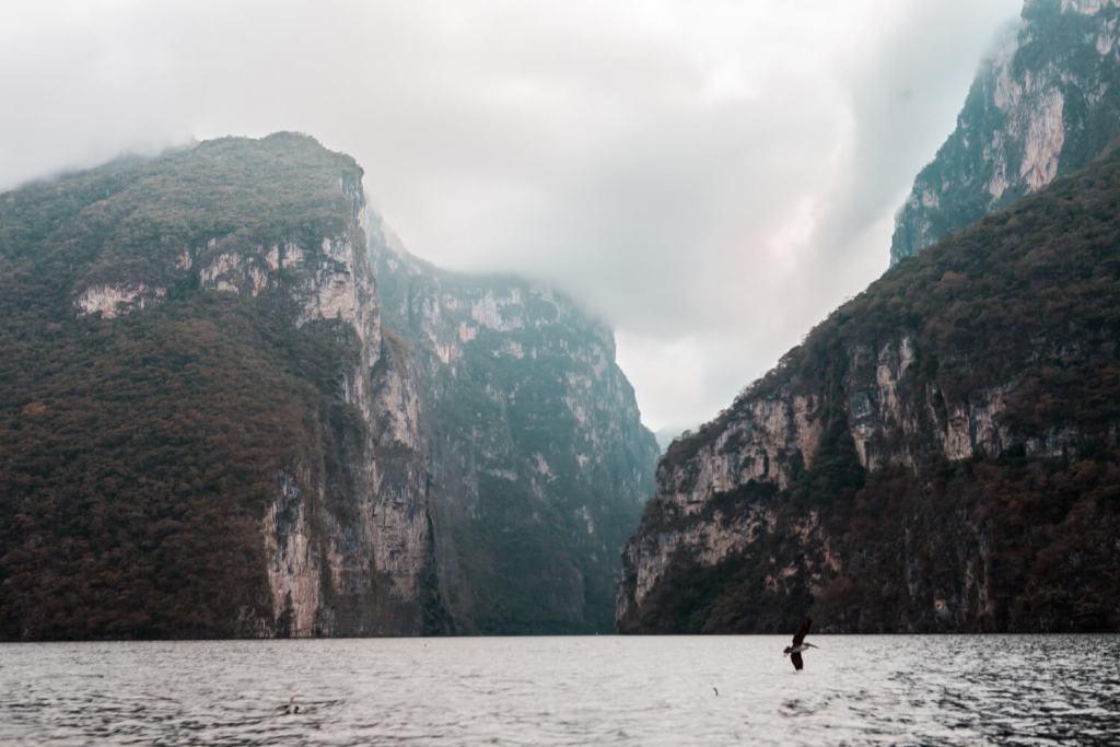 Canyon del Sumidero in Mexiko Vogel