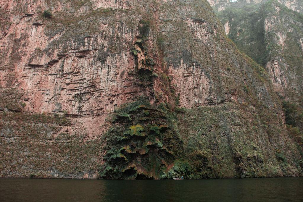 Canyon del Sumidero in Mexiko Arbol
