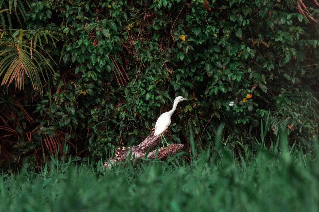 Vogel im Gras