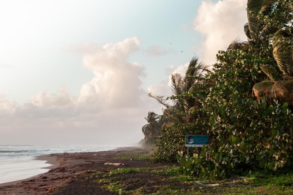 Strand Tortuguero Nationalpark in Costa Rica