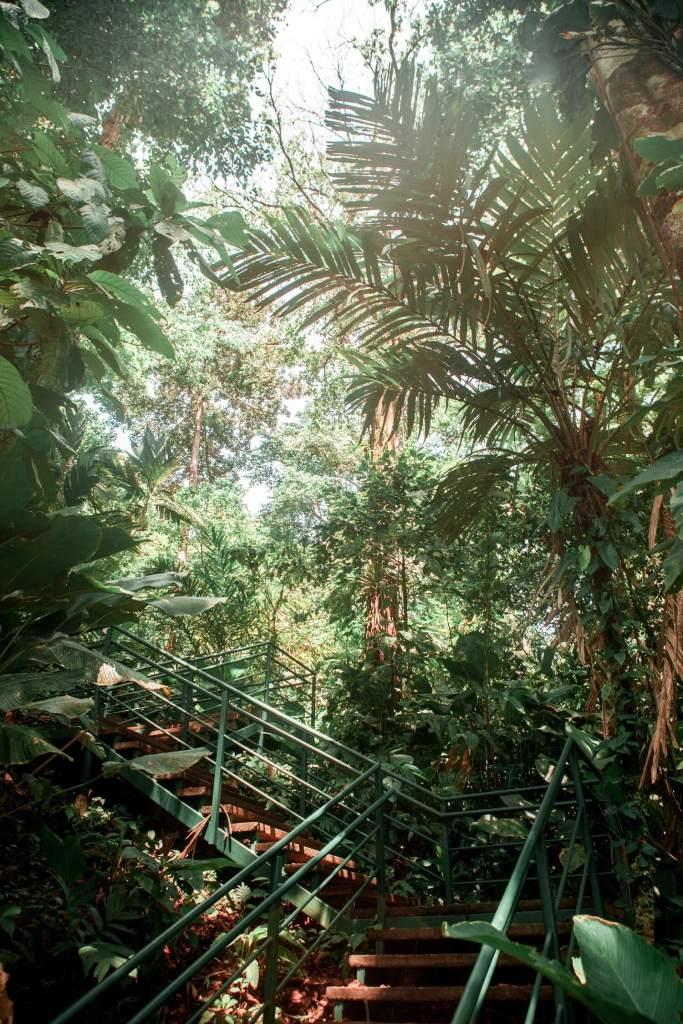Cerro Tortuguero Costa Rica Treppen
