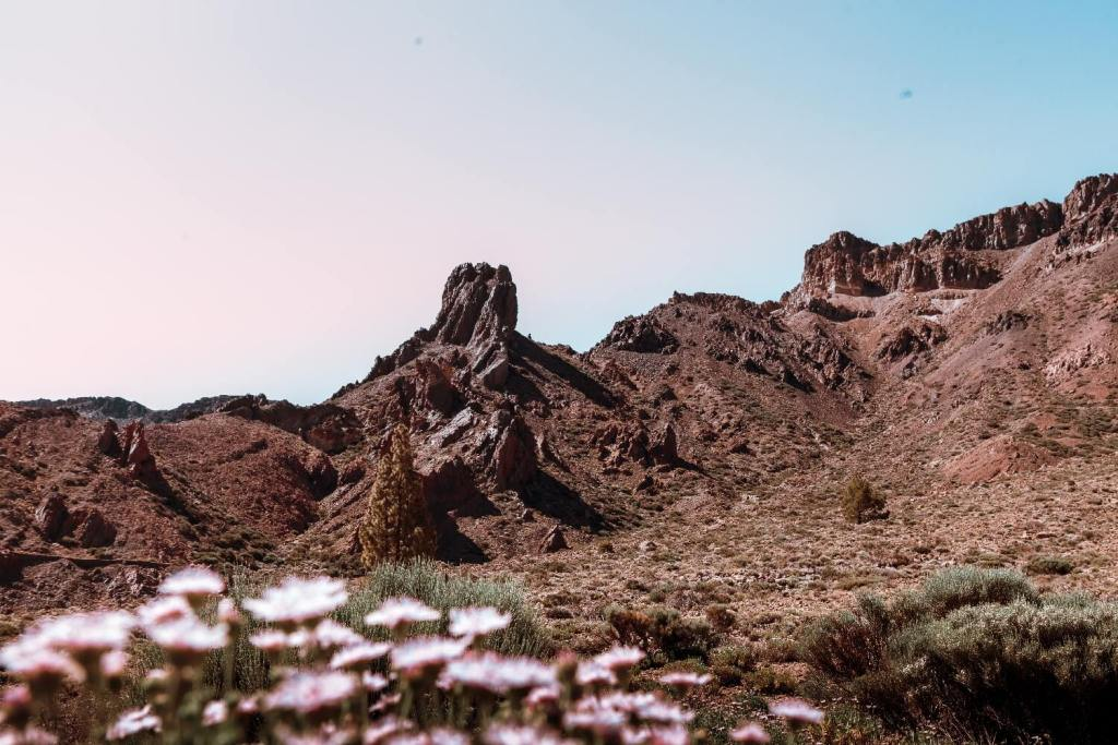 Nationalpark el Teide auf Teneriffa Blumen