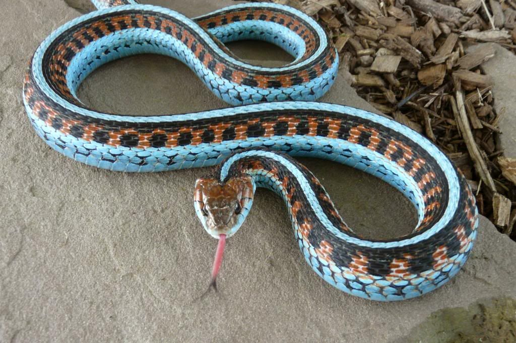 EXOTIC REPTILES FOR SALE AVAILABLE AT ONLINE STORE