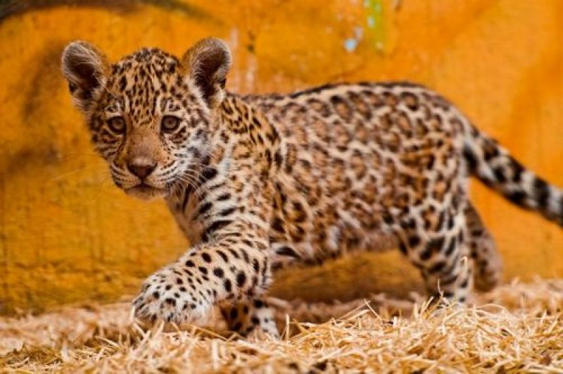 BABY WILD ANIMALS FOR SALE