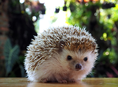 EXOTIC PET STORES NEAR ME ALL OVER THE WORLD