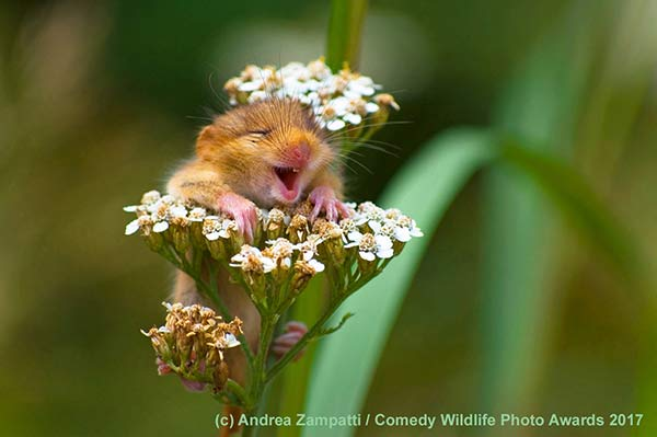 Comedy Wildlife Photography Awards 2017 The Land