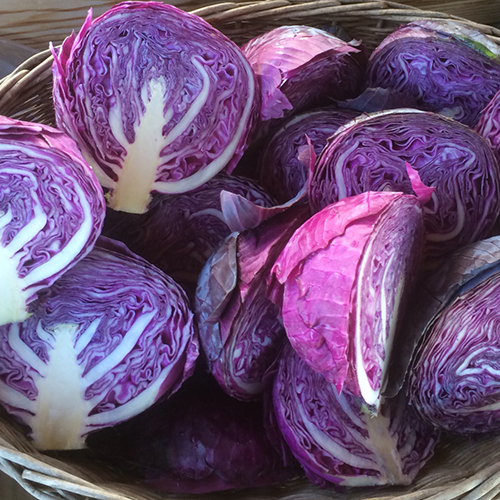 Why Cabbage is a Great Raw Food To Ferment