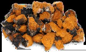 Chaga Mushroom Benefits