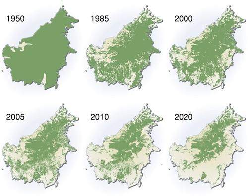 Palm Oil Deforestation