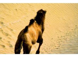 Camello Salvaje, Desierto de Lop, China