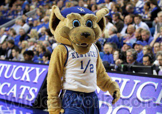 Kentucky Wildcat - photo by Tammie Brown | WildcatWorld.com