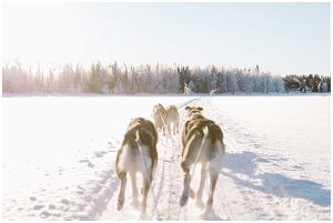 Husky Safari in Lapland by destination wedding photographer Cat