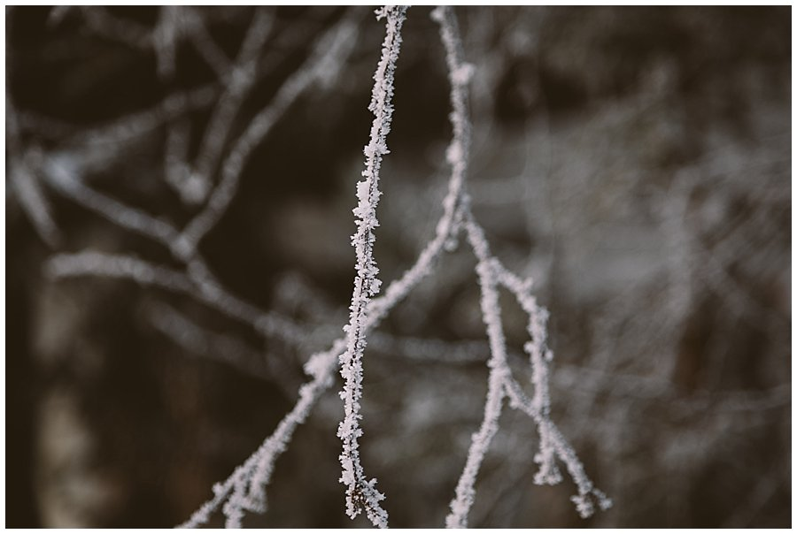 Frozen snow crystals on a tree branch in Levi Finland by Wild Connections Photography