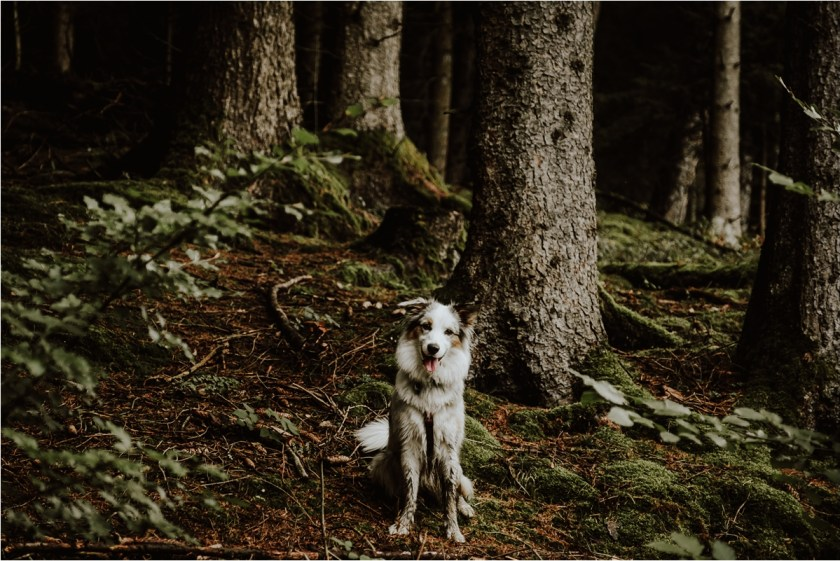 Lucy the Australian Sheepdog by Wild Connections Photography