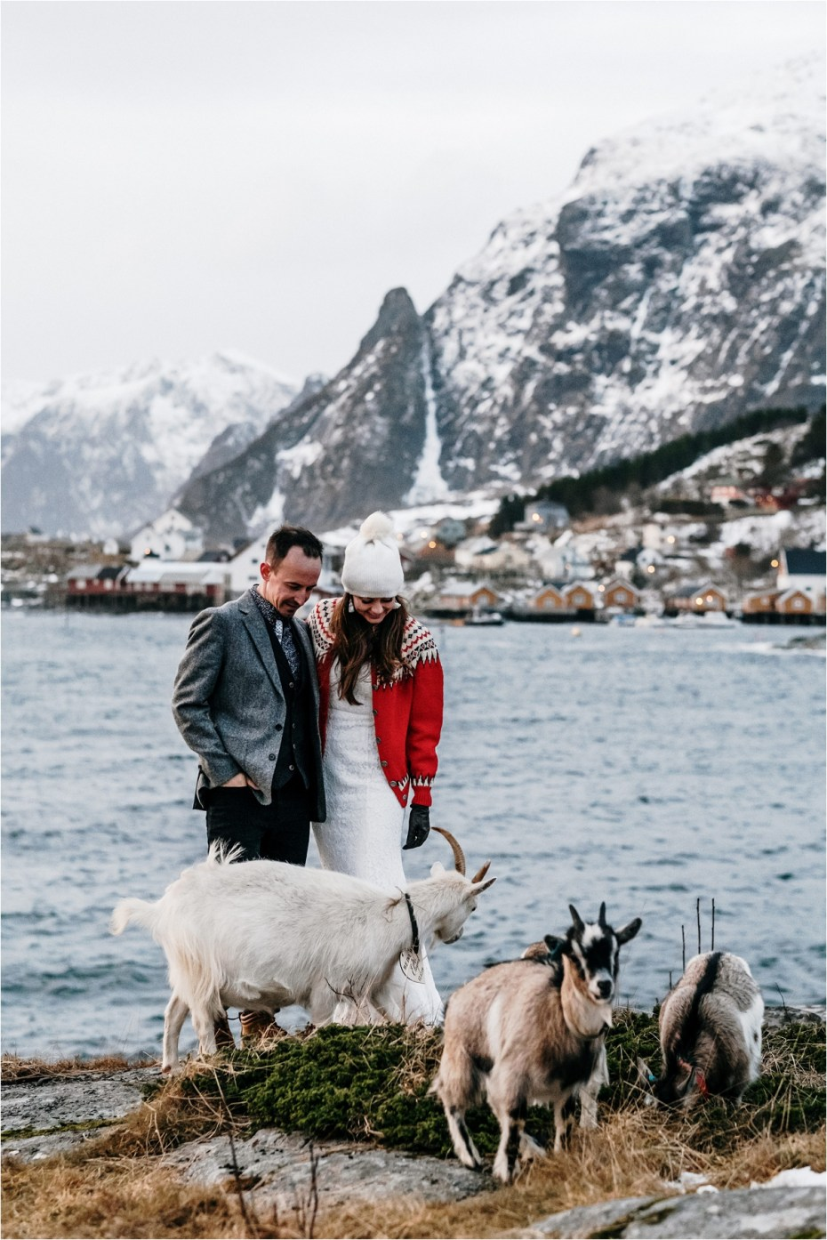 A winter elopement in the Lofoten Islands in Norway with goats. The bride wears a vintage wool cardigan. Photos by Wild Connections Photography