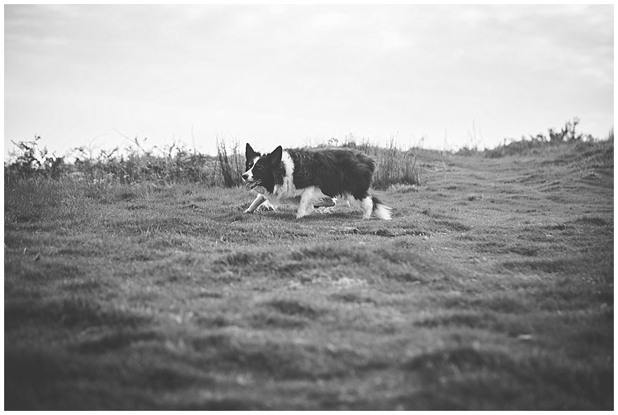 Wedding with Rescue Dogs - Black and white photo of one of the rescue dogs on the moors by Wild Connections Photography