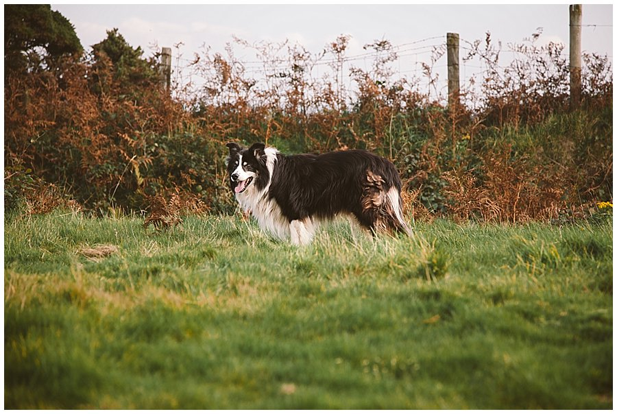 Wedding with Rescue Dogs - Border Collie rescue dog on the moors by Wild Connections Photography